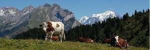 Prenons un bol d'air pur en Savoie et Haute-Savoie avec les bonnes adresses de nos membres Diamants !