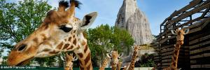 Dans la peau d'un explorateur en herbe avec le Parc Zoologique de Paris
