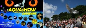 Audierne : Tous à l'eau, la faune marine fait son show !