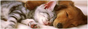 Top 5 des vidéos de bébés animaux les plus rigolotes du web