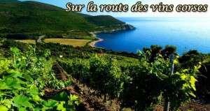 Ivresse sur la route des vins corses