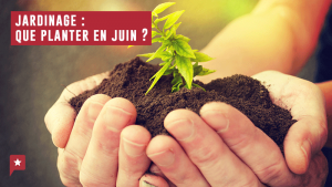 Jardinage : en juin on plante quoi ?