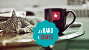 Les bars à chats, la nouvelle mode importée du Japon