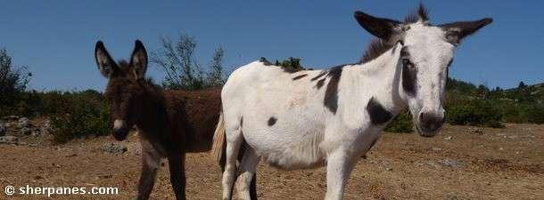 Tous En Selle Avec Sherp'ânes