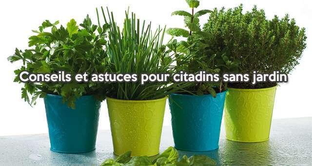 Jardinage : Conseils Et Astuces Pour Citadins Sans Jardin
