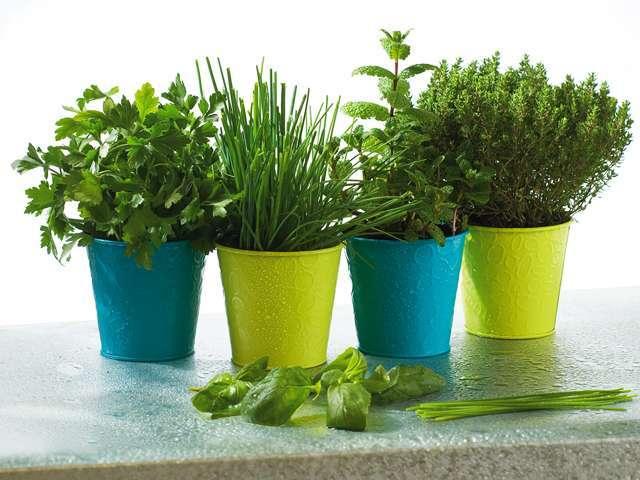 jardinage conseils et astuces pour citadins sans jardin. Black Bedroom Furniture Sets. Home Design Ideas