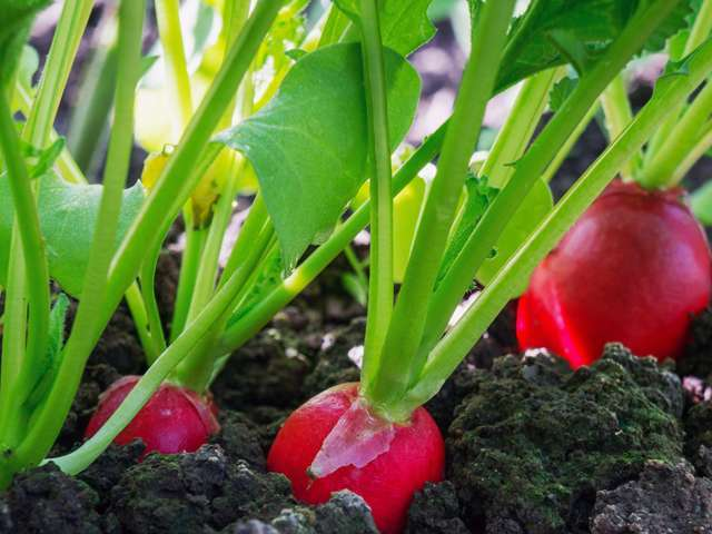 jardiner avec la lune en avril on plante quoi. Black Bedroom Furniture Sets. Home Design Ideas