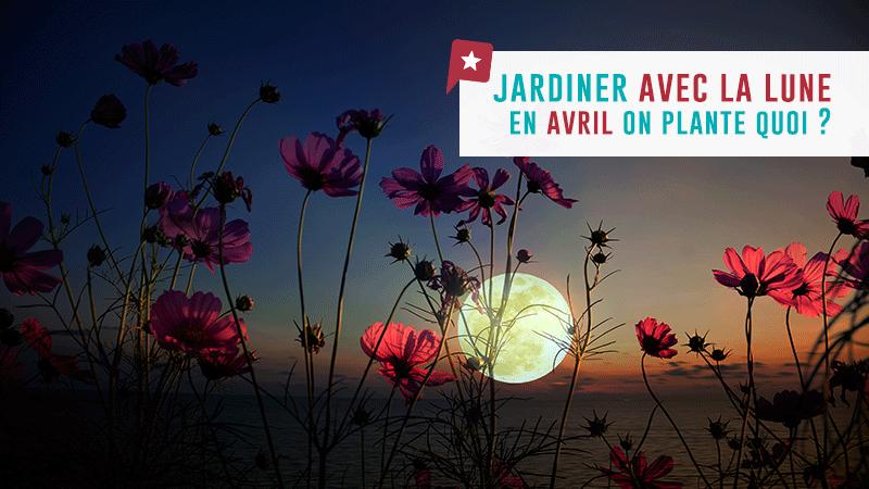 Jardiner Avec La Lune : En Avril On Plante Quoi ?