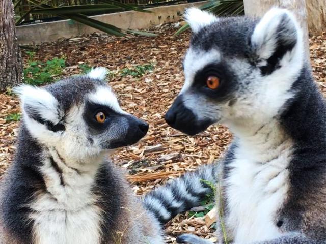 5 jardins remarquables sur la c te varoise for Jardin zoologique tropical