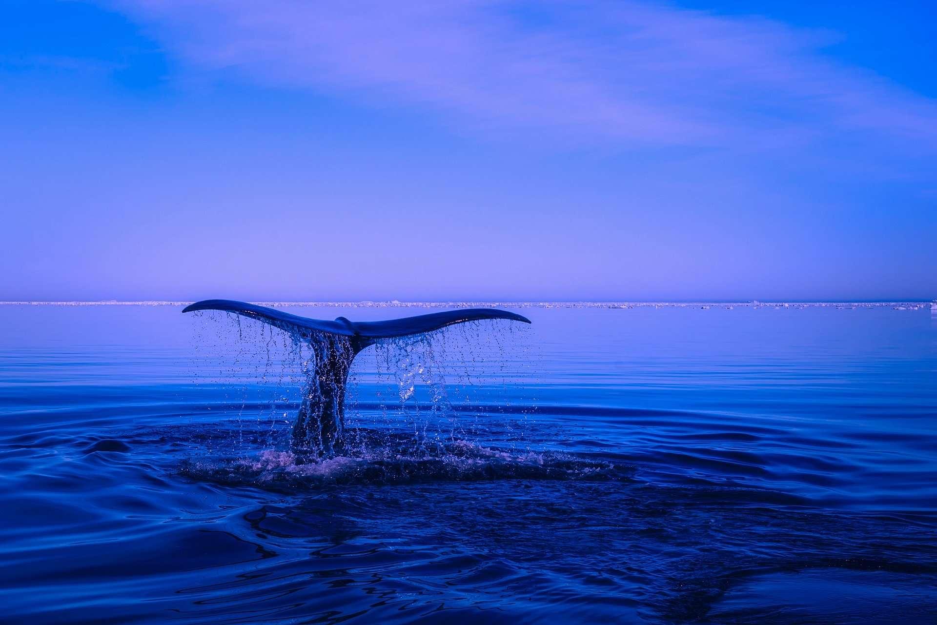 Journée Internationale De La Baleine Et Des Mammifères Marins