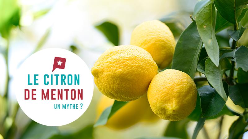 Le citron de menton mythe ou r alit - Quand cueillir les citrons ...