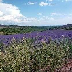 Senteurs et saveurs en Haute Provence