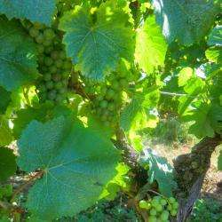 Vignobles et vignerons d'Alsace