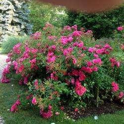 Parcs, jardins & roseraies en région Centre-Val-de-Loire